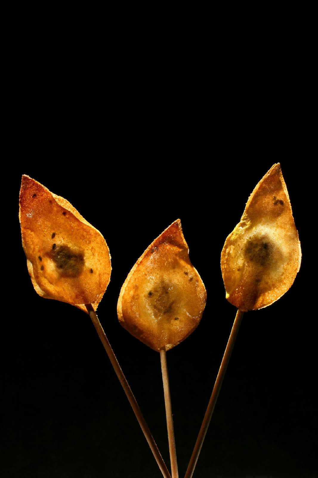 Crispy Tuna fish lollipop Pascal Guerreau & Philippe Conticini