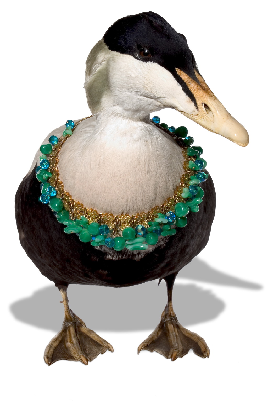 Jewellery Bird & necklace 2