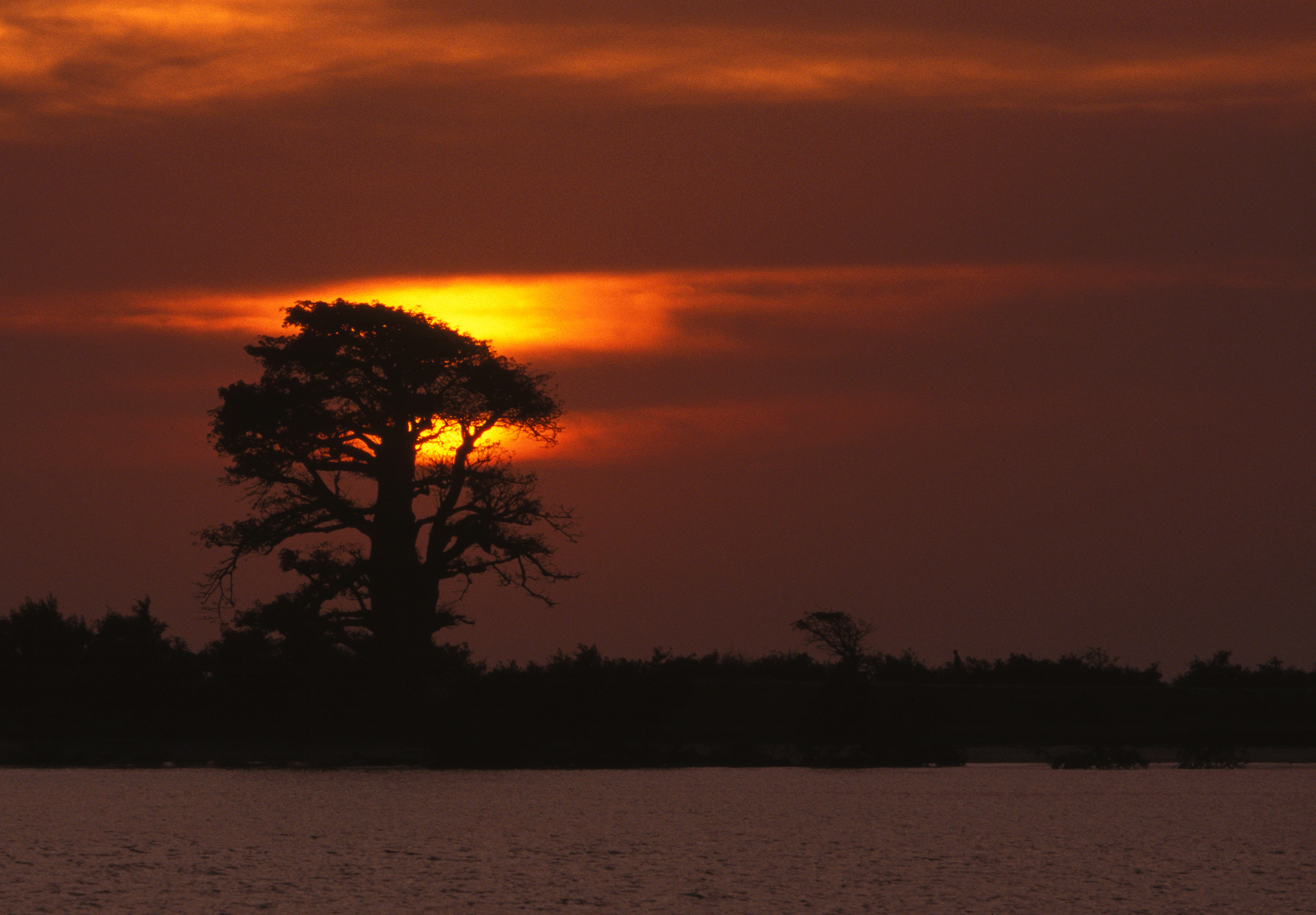 Sunset baobab GP