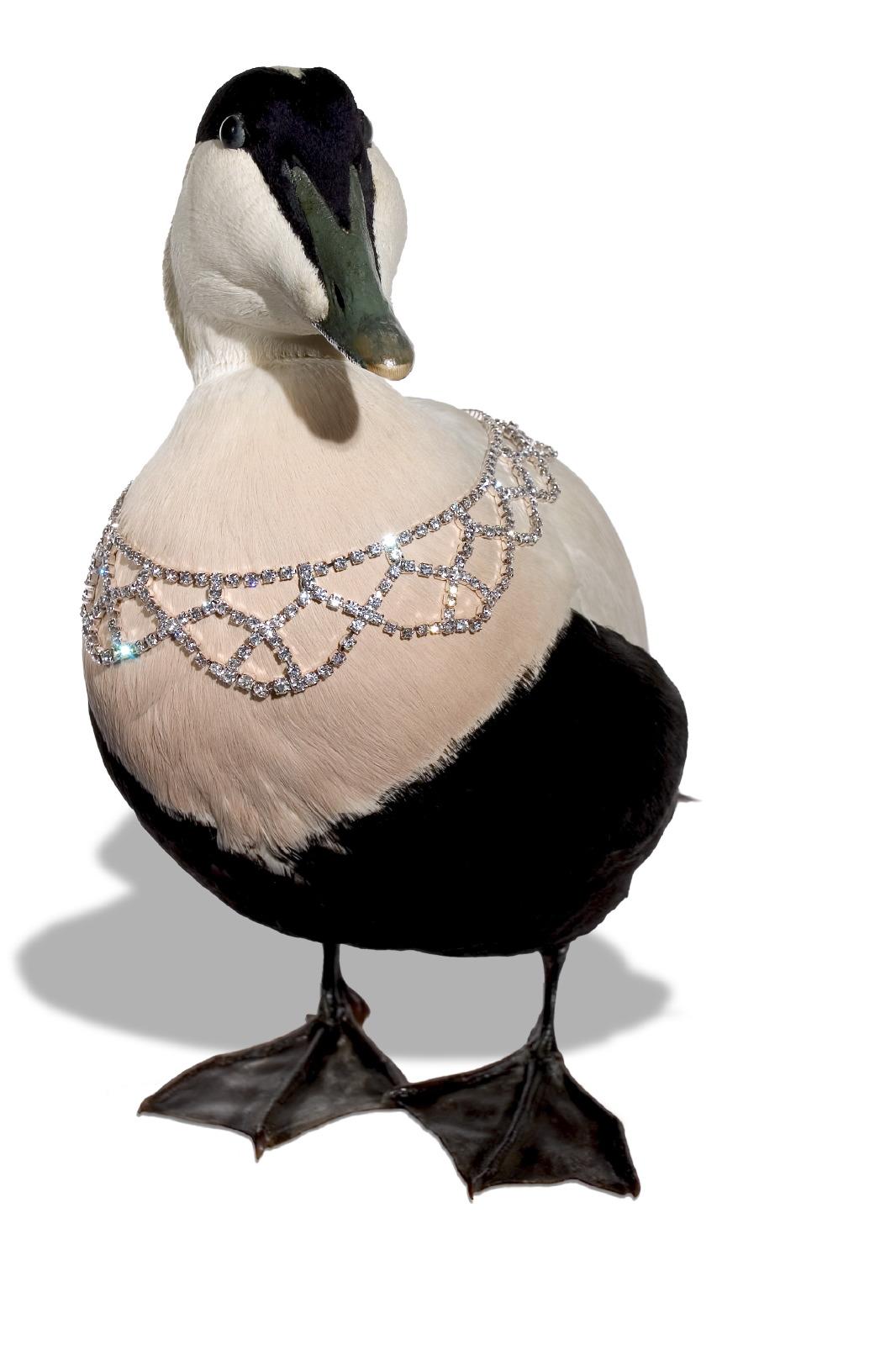 Jewellery Bird & necklace 3