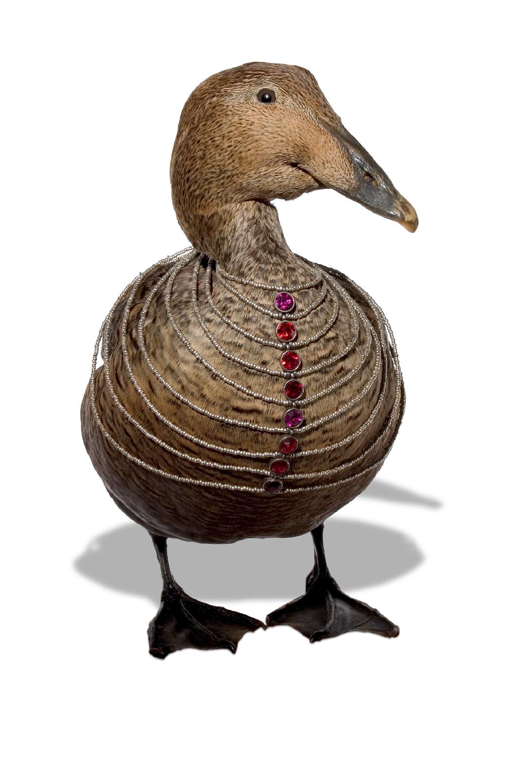 Jewellery Bird & necklace