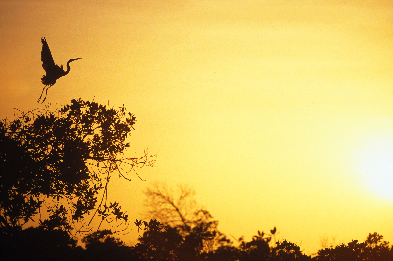 Heron Senegal