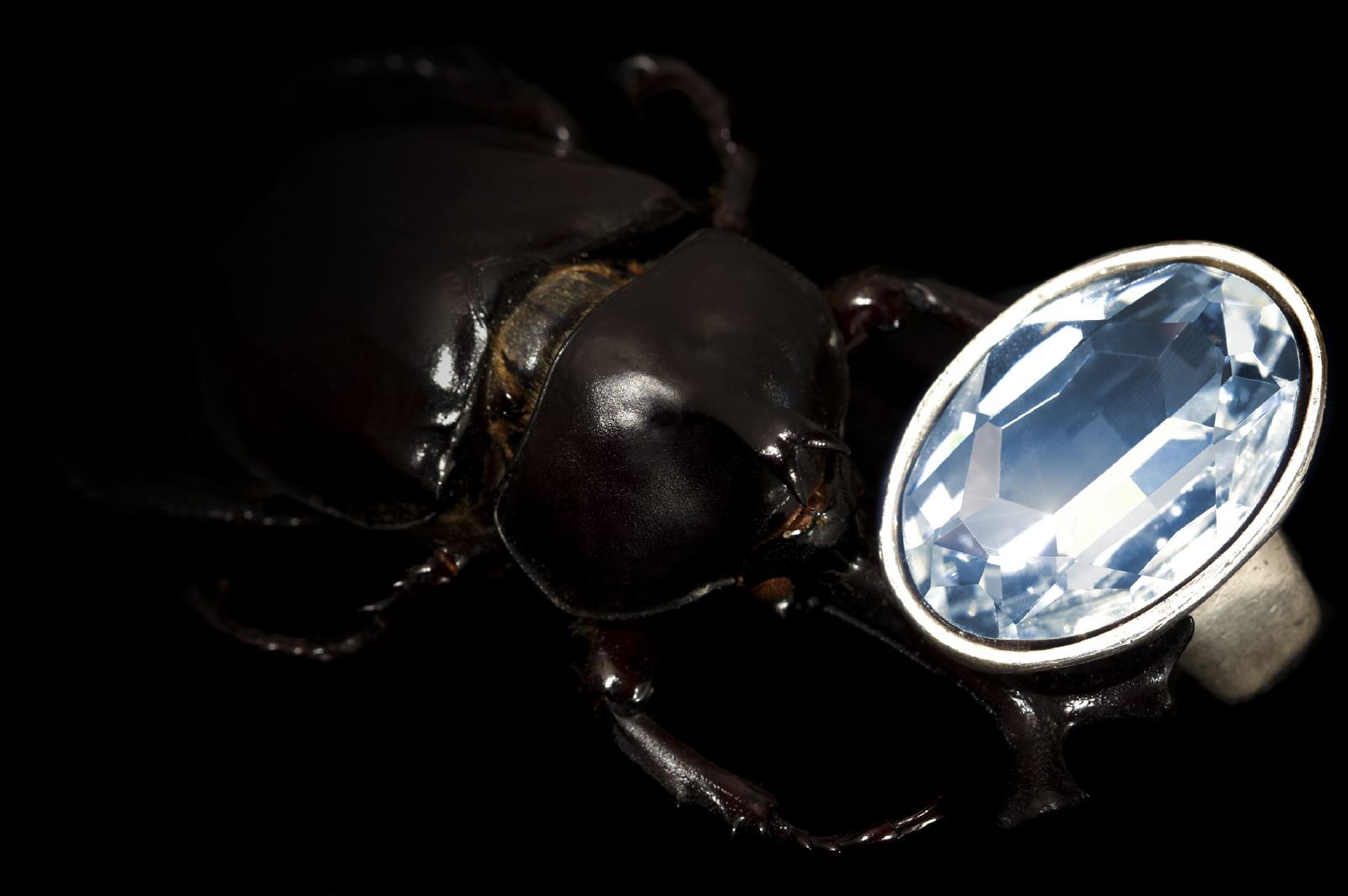 jewellery stag beetle & ring 2